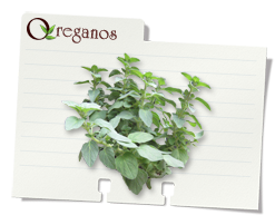 image noteCard oregano