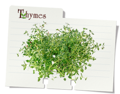 image noteCard thyme