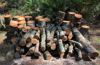 Firewood gathered from results of Hurricane Irma