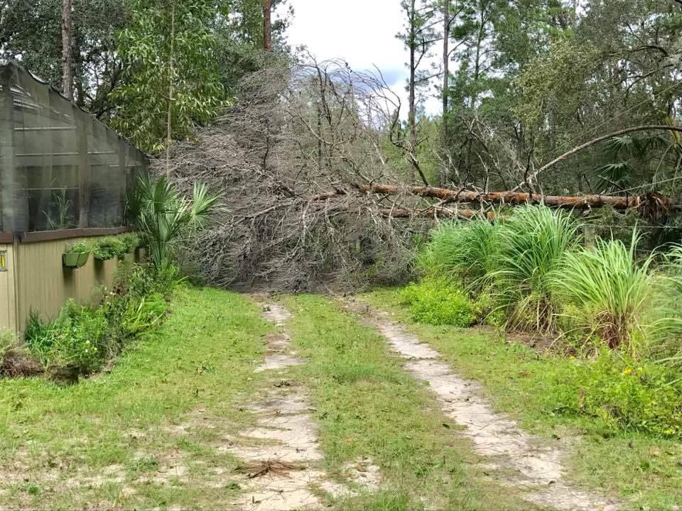 Hurricane Irma - Tree over over our driveway, downed power line